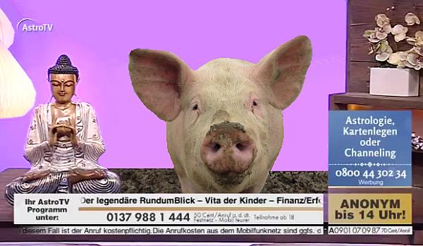 astrotv satire pig